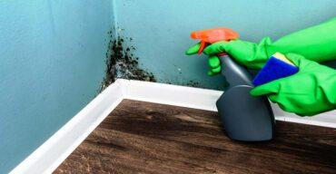 Saiba como deixa a parede da empresa limpa